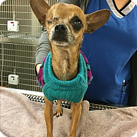 Adopt A Pet :: Capt. Morgan - Va Beach, VA