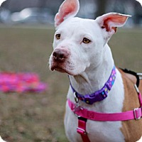 Adopt A Pet :: Leona - Wheaton, IL