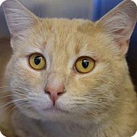Adopt A Pet :: Ernie - Sierra Vista, AZ