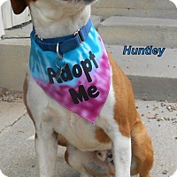 Adopt A Pet :: Huntley - Oskaloosa, IA