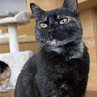 Adopt A Pet :: Marni - St. Louis, MO