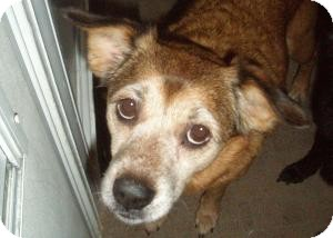 Feist Mix Dog for adoption in Acushnet, Massachusetts - Jessica