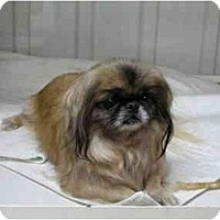 Adopt A Pet :: Rose - Rigaud, QC