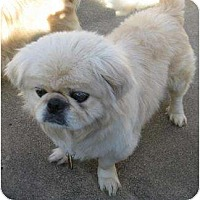 Adopt A Pet :: George - Tyler, TX