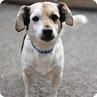Adopt A Pet :: Rico - Hamilton, ON