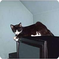 Adopt A Pet :: Lefty - Hampton, CT