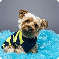 Adopt A Pet :: Mikey - Baton Rouge, LA