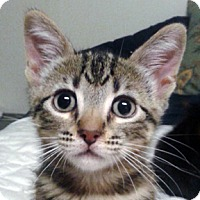 Adopt A Pet :: Titleist - Calgary, AB