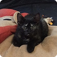 Adopt A Pet :: Gretel - Union, KY