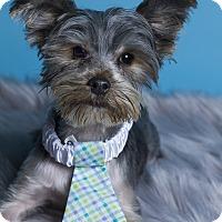Adopt A Pet :: Sawyer - Baton Rouge, LA