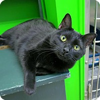 Adopt A Pet :: Reeta - Northbrook, IL
