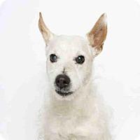 Adopt A Pet :: WINSTON - Murray, UT