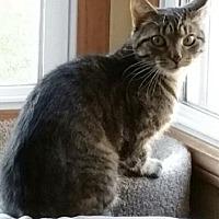 Adopt A Pet :: Jovie - Romeoville, IL