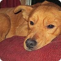 Adopt A Pet :: CARMELLO - Sardis, TN