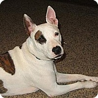 Terrier (Unknown Type, Medium) Mix Dog for adoption in Ponca City, Oklahoma - Spot