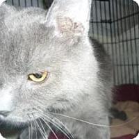Adopt A Pet :: Johnny - Milwaukee, WI