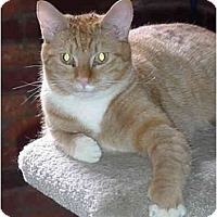 Adopt A Pet :: Wishbone - Chesapeake, VA