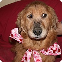 Adopt A Pet :: Faith - Covington, KY