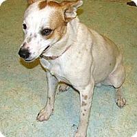Adopt A Pet :: Flapjack - Seattle, WA