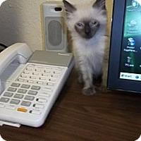 Adopt A Pet :: Misti - Fort Lauderdale, FL
