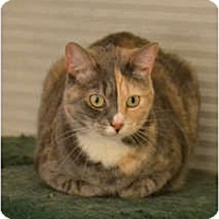 Adopt A Pet :: Nellie - Laguna Woods, CA