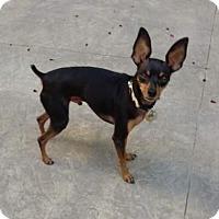 Adopt A Pet :: Beauregard - Oceanside, CA