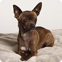 Adopt A Pet :: Katy - Oakland, CA