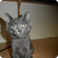 Adopt A Pet :: Xaviera - Milwaukee, WI