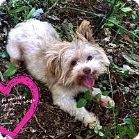 Adopt A Pet :: Eve - Franklinton, NC