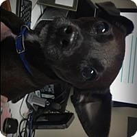 Adopt A Pet :: Trooper - Muskegon, MI