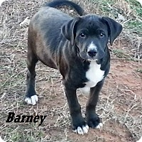 Adopt A Pet :: Barney pending adoption - Manchester, CT