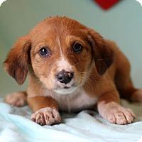 Adopt A Pet :: Kennedy - Waldorf, MD