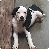 Adopt A Pet :: Quartz - Boca Raton, FL