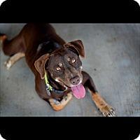 Adopt A Pet :: Peanut - Brattleboro, VT