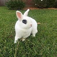 Adopt A Pet :: Mrs Lovett - Sunset, LA