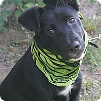 Adopt A Pet :: Boogie - Hutchinson, KS