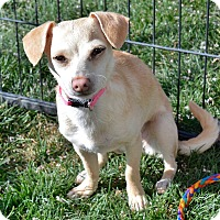 Adopt A Pet :: Darla - Meridian, ID
