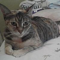Adopt A Pet :: Athena - oakland park, FL