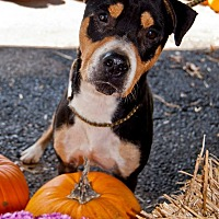 Adopt A Pet :: Ali - Shelbyville, KY
