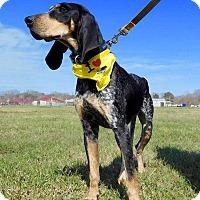 Adopt A Pet :: Penelope - St. Francisville, LA