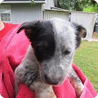 Adopt A Pet :: Ally - Wharton, TX