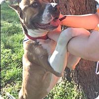 Adopt A Pet :: Rufus - Tavares, FL