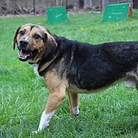 Adopt A Pet :: JR - Sparta, NJ