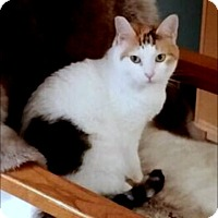 Adopt A Pet :: Offered by Owner 'Leilani' Young Adult - HILLSBORO, OR