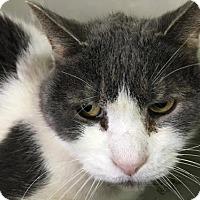 Adopt A Pet :: Big Man - Orleans, VT