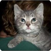 Adopt A Pet :: Benley - Acme, PA