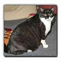 Adopt A Pet :: Sonny - Howell, MI