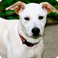 Adopt A Pet :: Lolly - Hastings, NY