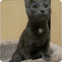 Adopt A Pet :: Jay - Reston, VA