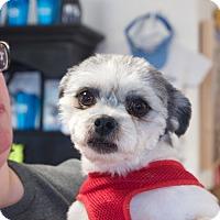 Adopt A Pet :: Lennon - Homewood, AL